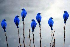 :) BLUE <3