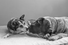 November is Adopt a Senior Pet Month so it seems fitting to share this story of a foster senior dog who spent her last days with Robyn from RDP PhoDOGraphy.