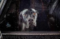Série de fotos retrata o silêncio de cães nos carros esperando por seus donos