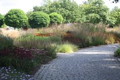 Oudolf ~ Maximilian Park, Hamm, North Rhine-Westphalia, Germany  _/\/\/\/\/\_