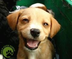 nothing like a smiling puppy to bring a, um, smile!  :D