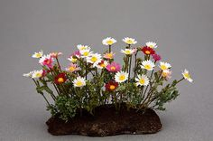 Good Sam Showcase of Miniatures: At the Show: Florals