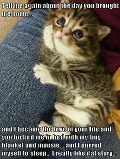 Very interesting post: TOP 35 Funny Cats and Kittens Pictures.сom lot of interesting things on Funny Animals, Funny Cat. Little Kittens, Cute Cats And Kittens, I Love Cats, Crazy Cats, Funny Kittens, Adorable Kittens, Tiny Kitten, Black Kittens, Kittens Cutest Baby