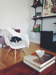 Monday's pets on furniture - desire to inspire - desiretoinspire.net