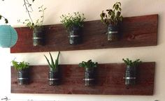A neat way to bring plant into the classroom