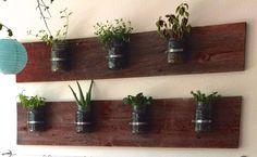 bringing plants into the classroom reggio style