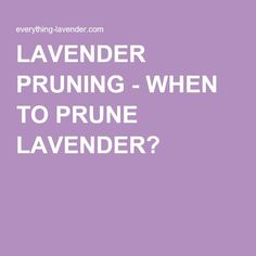 LAVENDER PRUNING - WHEN TO PRUNE LAVENDER?