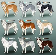 479 Best Siberian Husky Images Dog Photo Contest Dog Breeds