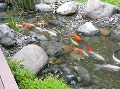 Koi koi ponds on pinterest koi ponds koi and garden ponds for Japanese pond ornaments