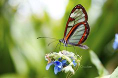 Butterfly by Camilo Aguilar on 500px