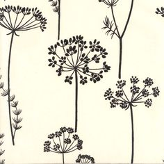 Queen Anne's Lace Print
