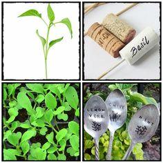 seed, grow, home, homesteding, farm, flowers, vege, nasiona, rozsada, warzywnik, zioła, kwiaty, byliny, ogród, znacznik, tags, znaczniki