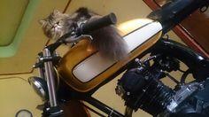Catz motorcyle