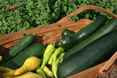 zucchini - Google Search  @Corner Bakery Cafe