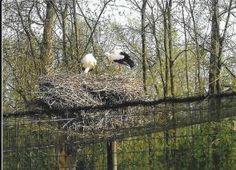 er was een koppel ooievaars in de weide aan de voordeur maar zonder hun nest voor ik het wist van de komst van de baby HOERA