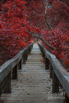 The Boardwalk, Fort Worth Nature Center and Refuge, Texas | Douglas Barnard