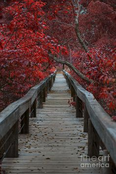 The Boardwalk, Fort Worth Nature Center and Refuge, Texas | Douglas Barnard