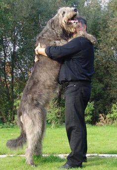 контакт с собакой