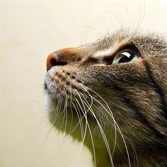 Nem todos os alimentos que os seres humanos ingerem são apropriados para os gatos. Aliás, produtos que comemos no dia-a-dia podem causar vários problemas de saúde a estes animais. E podem mesmo levar à morte quando comidos em quantidades exageradas.