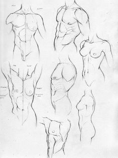 Anatomy Study Part 2-Torso by ~Rogzilla on deviantART