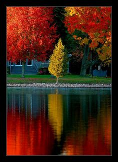 I love fall colors Beautiful World, Beautiful Places, Beautiful Pictures, Beautiful Gif, Seasons Of The Year, All Nature, Autumn Photography, Scenery, Amazing