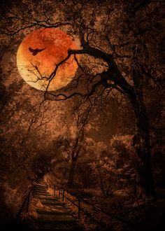 Halloween inspired composite using a lunar eclipse and a digital infrared image of trees and stairway shot at the Los Angeles County Arboretum. Moon Pictures, Nature Pictures, Shoot The Moon, Moon Photography, Autumn Scenery, Galaxy Painting, Beautiful Moon, Fantasy Landscape, Moon Art