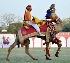 Rajasthan Diwas 2016 - camel tattoo show was spectacular as people saw extraordinary acts performed by camels and their riders.