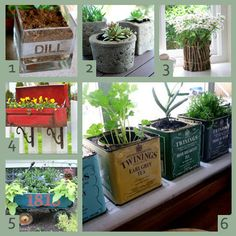 Different planter ideas
