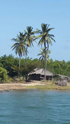 Margens Rio São Francisco - Alagoas