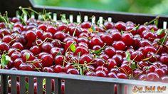 Ezt fald fel!: Meggybor készítése házilag – házi meggybor recept Fruit, Alanya