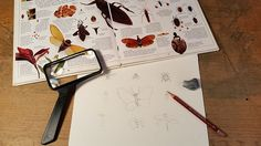 Nature Explorer: How to Draw and Paint Insects