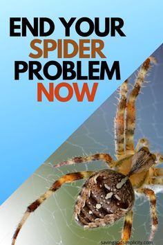 Keep Spiders Away, Scared Of Spiders, Get Rid Of Spiders, Spider Killer, Spider Spray, Homemade Bug Spray, Bug Spray Recipe, House Cleaning Tips, Cleaning Hacks