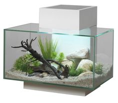 Stylish and contemporary, Fluval Edge is a unique cube-shaped aquarium that turns fishkeeping into an extraordinary visual experience. Edge's simple, uncluttered design allows a clear and un...