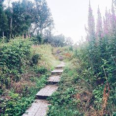 Walks near Dublin - Lough Tay, Girley Bog
