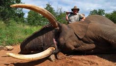 Celebrity Trophy Hunter Trampled to Death By Elephant He Was Trying to Hunt