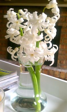 to plant in fall: White Hyacinth My Flower, Flower Power, Beautiful Flowers, White Hyacinth, Hyacinth Flowers, Wedding Notes, Wedding Ideas, Early Spring Flowers, Simple Centerpieces