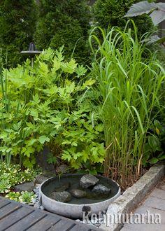 Pieni on kaunista. Myös vesiaiheissa. www.kotipuutarha.fi