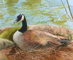 """Contemporary Painting - """"Nesting"""" (Original Art from Marcy Lansman)"""
