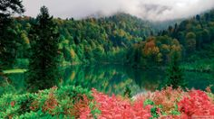 Günün Masaüstü Duvar Kağıdı #wallpaper #karagol #artvin #orman #forest #lake #nature #doga
