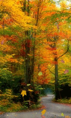new ideas landscape photography woods colour Beautiful World, Beautiful Places, Beautiful Pictures, Fall Pictures, Nature Pictures, Landscape Photography, Nature Photography, Colour Photography, Beau Site