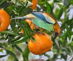 Fotografia: Hevennicio Silva.  http://www.portalanaroca.com.br/bora-almocar-gente-espia-o-que-esses-lindos-comem/