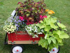 fresh new garden picture ideas - Google Search