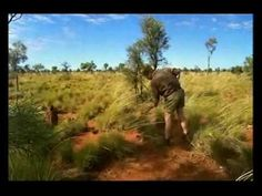 Australia Ray Mears Wild Food.. Hunting and Gathering. All Episodes on You tube. Terrific Information.