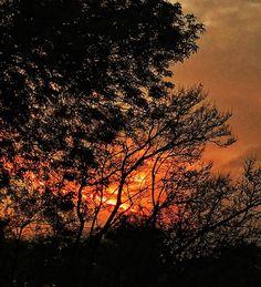 Fire in the sky! #sunset #fire #red #orange #daysend #fin #burn #tree #dreams #cloud #sky #cdmx #openExposure #instagoodmyphoto #justgoshoot #passionpassport #worldtravelbook #travel #adventure #igers_mx #igs_photos #aroundtheworld #beauty #blessed #joy #celebratelife #lovemylife #igers #may2017 17.05.2017