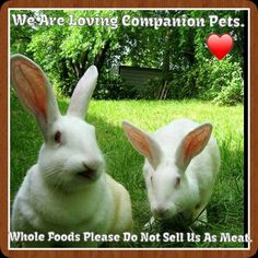 New Zealand's that are being used as meat. They are loving wonderful house pets, New Zealand Rabbits, We Are Love, Animal House, Bunny Rabbit, Whole Food Recipes, Bunnies, Foods, Meat, Animals