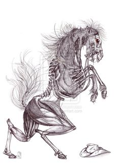Skeleton Horse by Teggy on deviantART