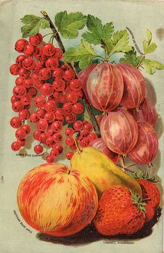 Fruits - Seed Catalogs from Smithsonian Institution Libraries Vintage Poster, Vintage Postcards, Vintage Prints, Vintage Diy, Vintage Images, Vintage Labels, Seed Catalogs, Garden Catalogs, Decoupage