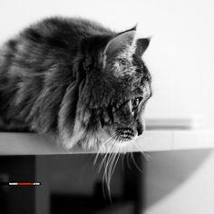 #Nature #cat #feline #whiskers #curiosity #marioguarneros #photography | http://instagram.com/marioguarneros