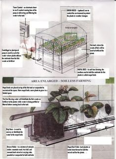 Have you heard of aquaponics? Aquaponics Combines the Growing of Fish and Plants You may grow plants in water and without soil and once one does this together with growing fish you are practicing aquaponics. Aquaponics Fish, Aquaponics System, Indoor Aquaponics, Hydroponic Gardening, Organic Gardening, Aquaponics Greenhouse, Hydroponic Growing, Cool Things To Make, Things To Come