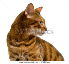 94 best cat profile pictures images  cat profile cats